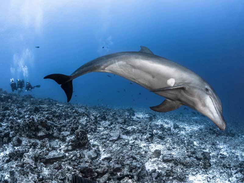Polynésie française - Plongée dans les Iles Tuamotu © Tahiti Tourisme - Greg Lecoeur