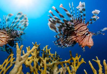 Marsa Alam © Red Sea Diving Safari - Matej Simonic