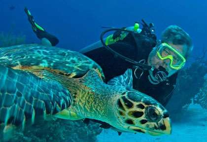 Tortue Little Cayman