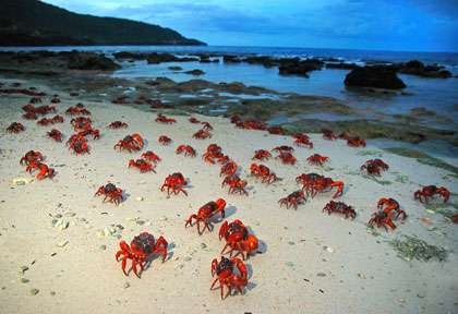Crabes Rouges