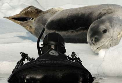 Antarctique © Waterproof Expeditions - Goran Ehlme
